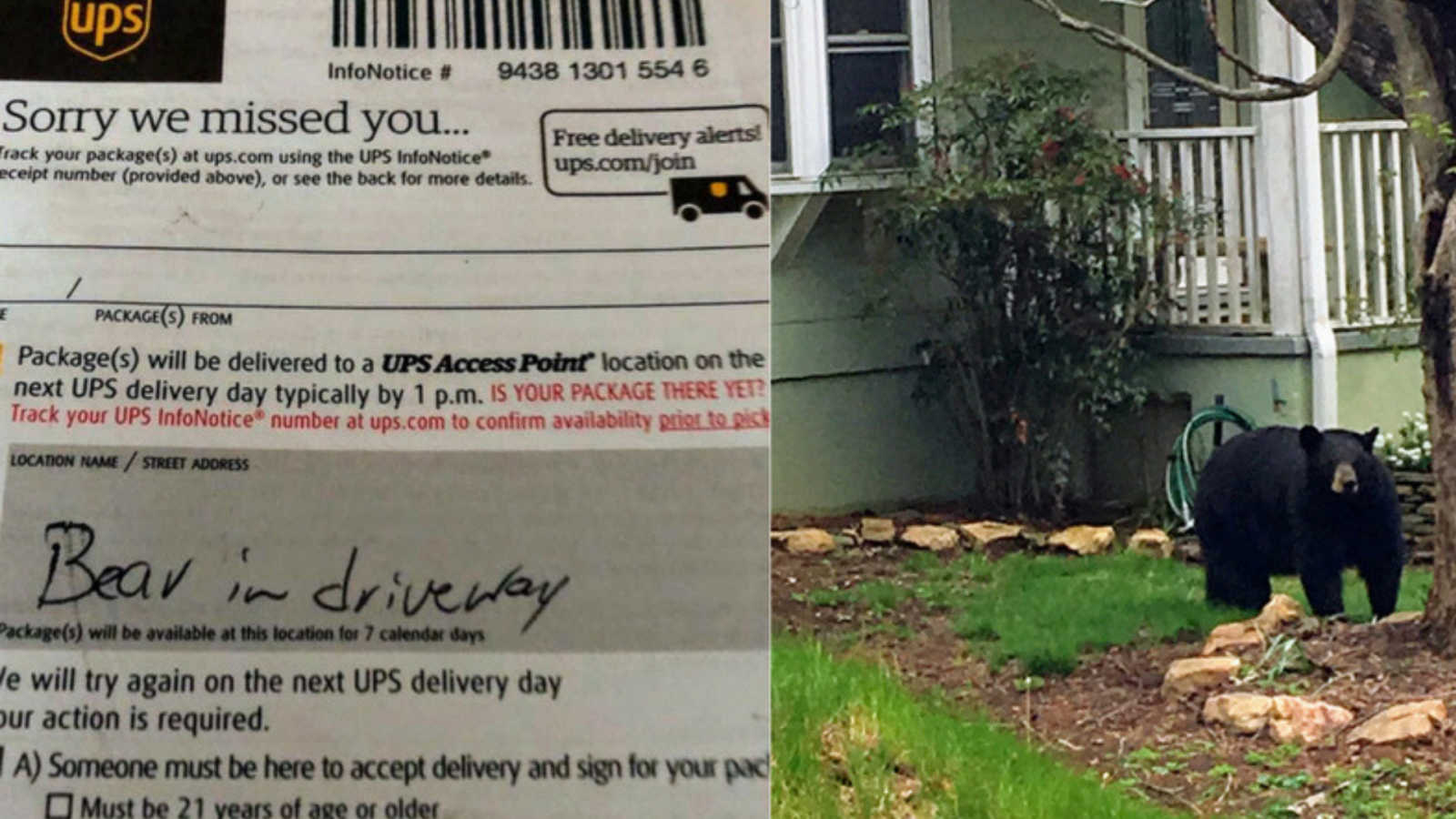 Sorry we missed you – Bear in driveway': UPS delivery