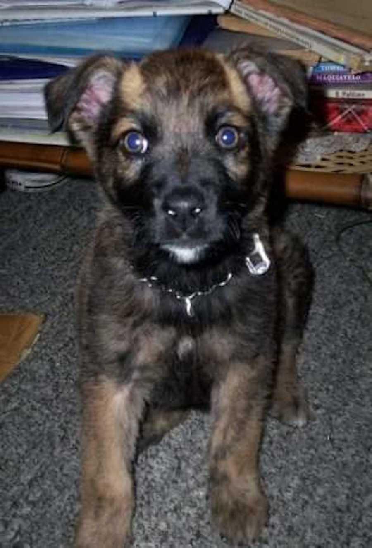 Rombo- a dog