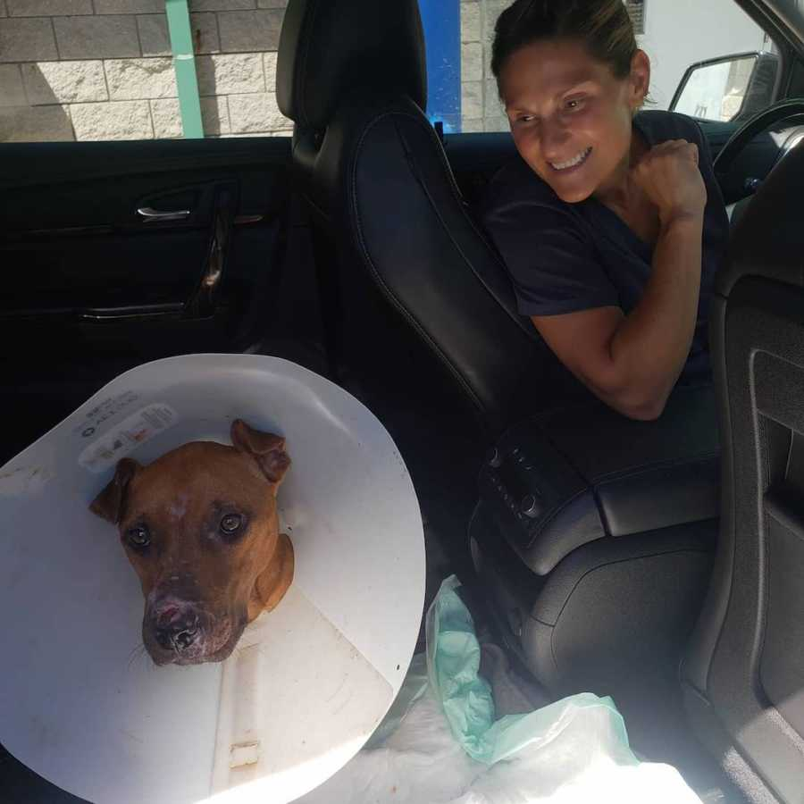 dog with a cone on its head in a car
