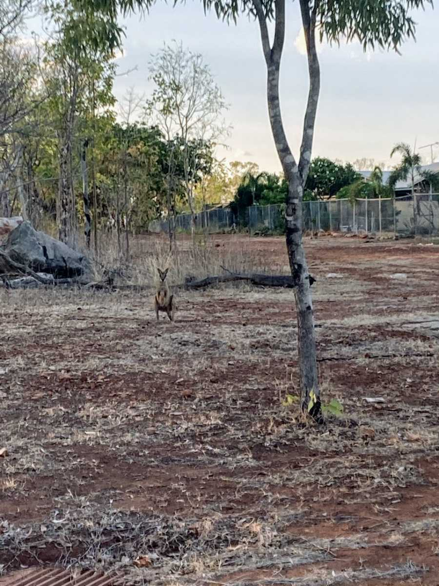 Mom snaps a photo of a kangaroo in red dirt during a nature walk with her kids
