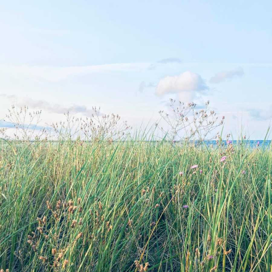 Woman sharing metaphor on perspective snaps a photo of overgrown weeds with water in the distant horizon
