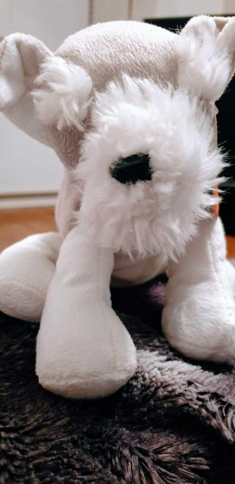 A fluffy white toy dog