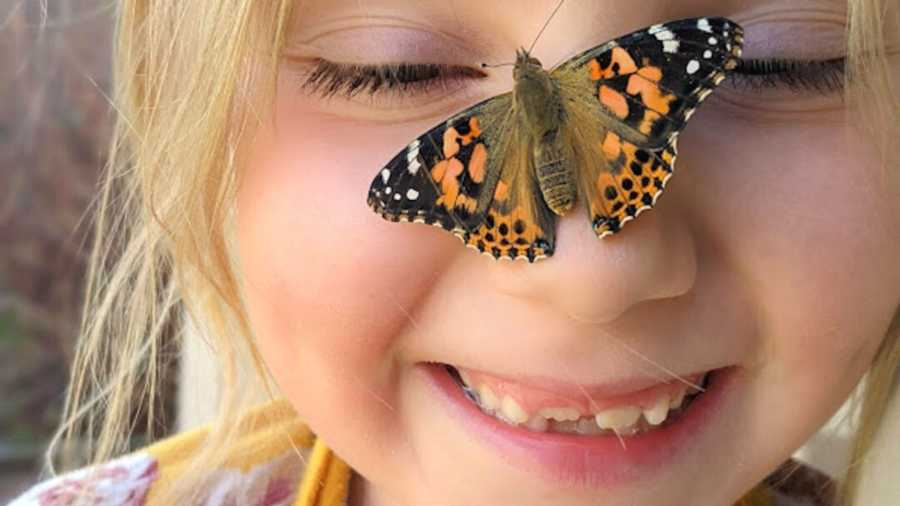 little girl with butterfly on nose