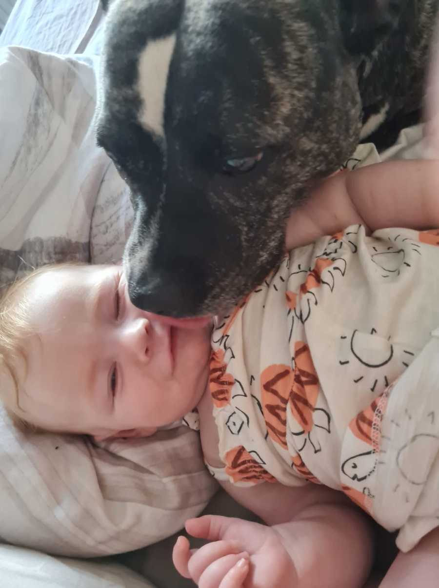 baby and the dog