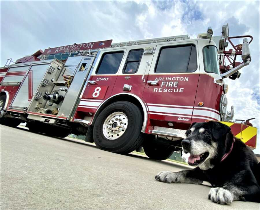 Rescued dog, Zoey, poses with Arlington Fire Rescue truck.