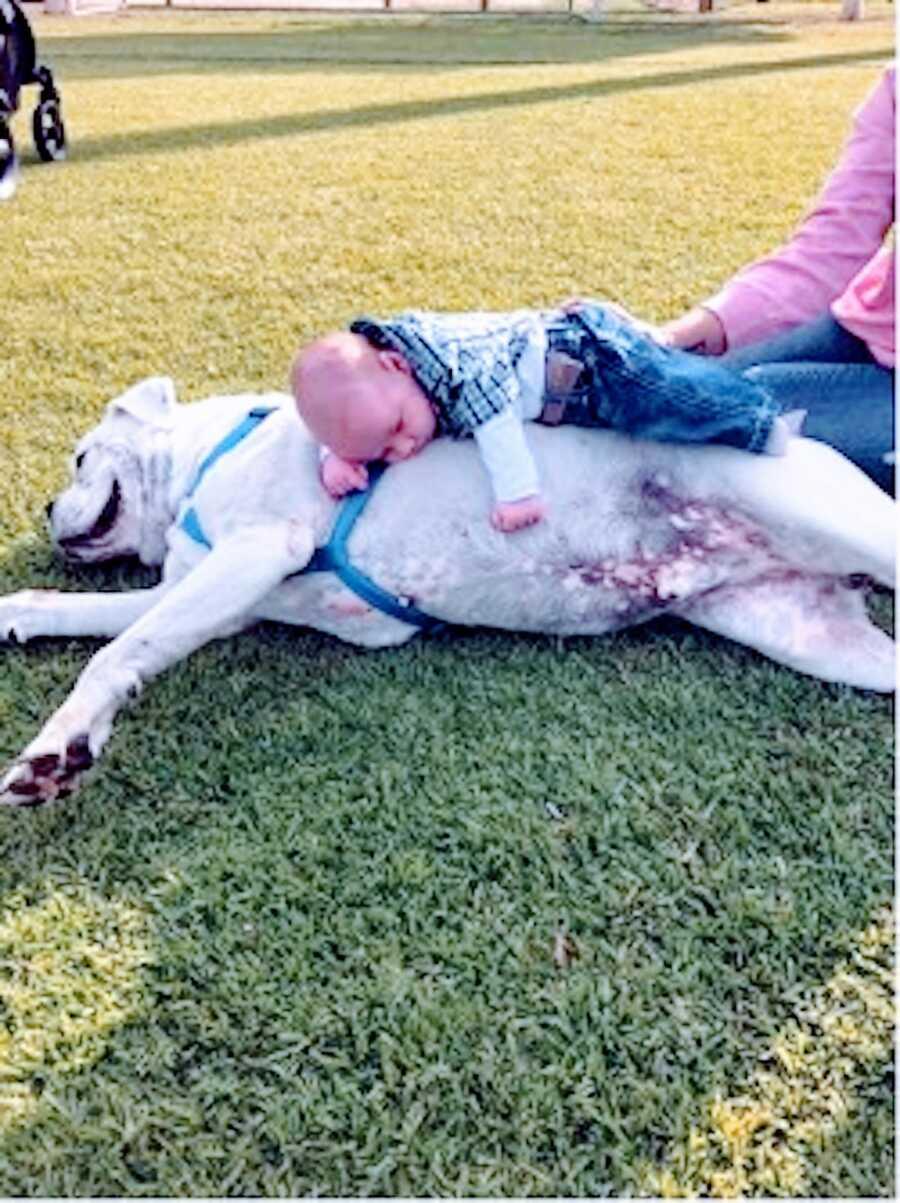 一个小男孩躺在一只辅助狗上