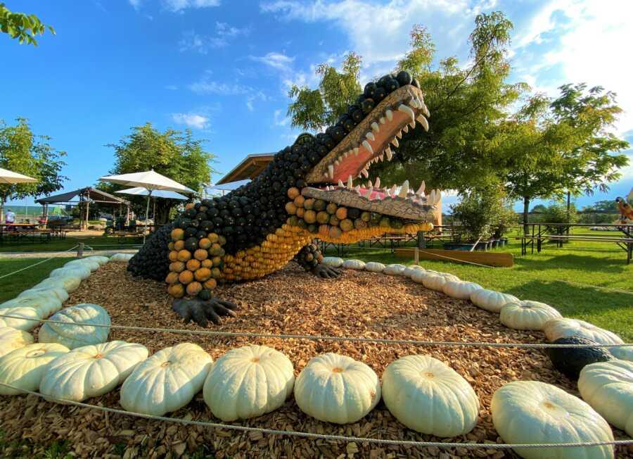 Giant crocodile at Jucker Farm's pumpkin exhibition.
