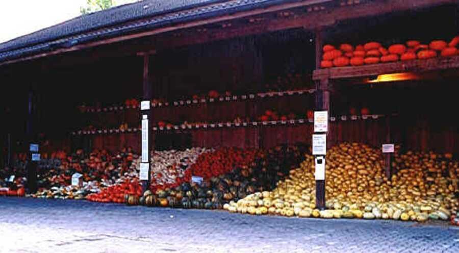 First ever pumpkin exhibition at Jucker Farm in 1998.