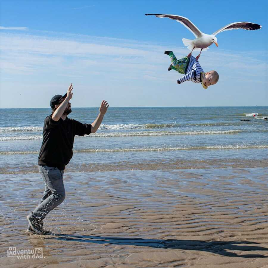 Dad runs after baby who was snatched up by a seagull at the beach.