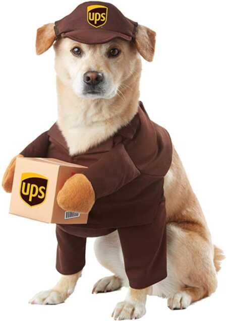 Brown UPS carrier pet costume for Halloween.