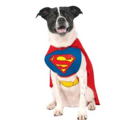 Superman pet costume for Halloween.