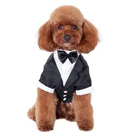 Fancy tuxedo formal attire pet costume for Halloween or weddings.