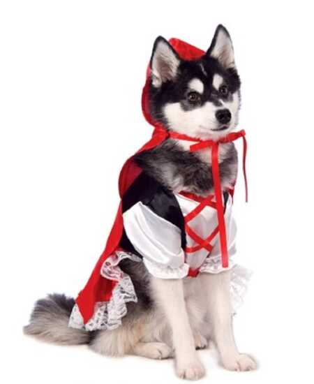 Little Red Riding Hood pet costume with red hood for Halloween.