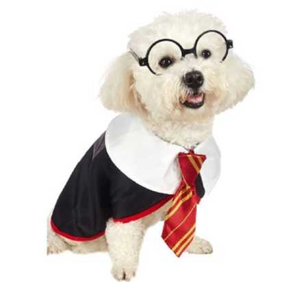 Harry Potter pet costume with glasses for Halloween.
