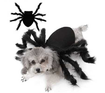Giant furry spider pet costume for Halloween.