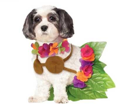 Hula girl pet costume with grass skirt, coconut bra, and lei for Halloween.