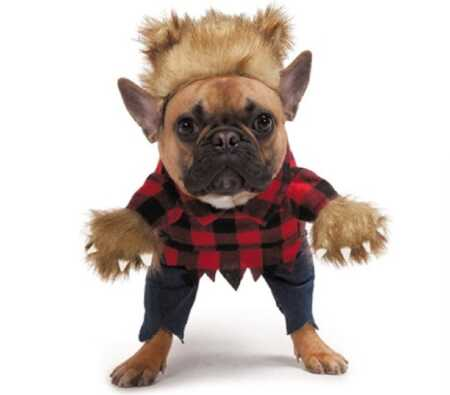 Werewolf pet costume with plush arms for Halloween.