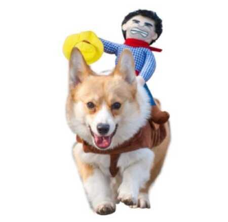Plush cowboy rider pet costume for Halloween.