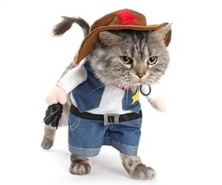 Funny cowboy pet costume for Halloween.