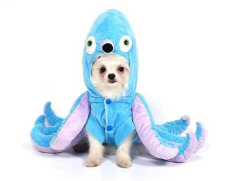 Blue octopus pet costume for Halloween.